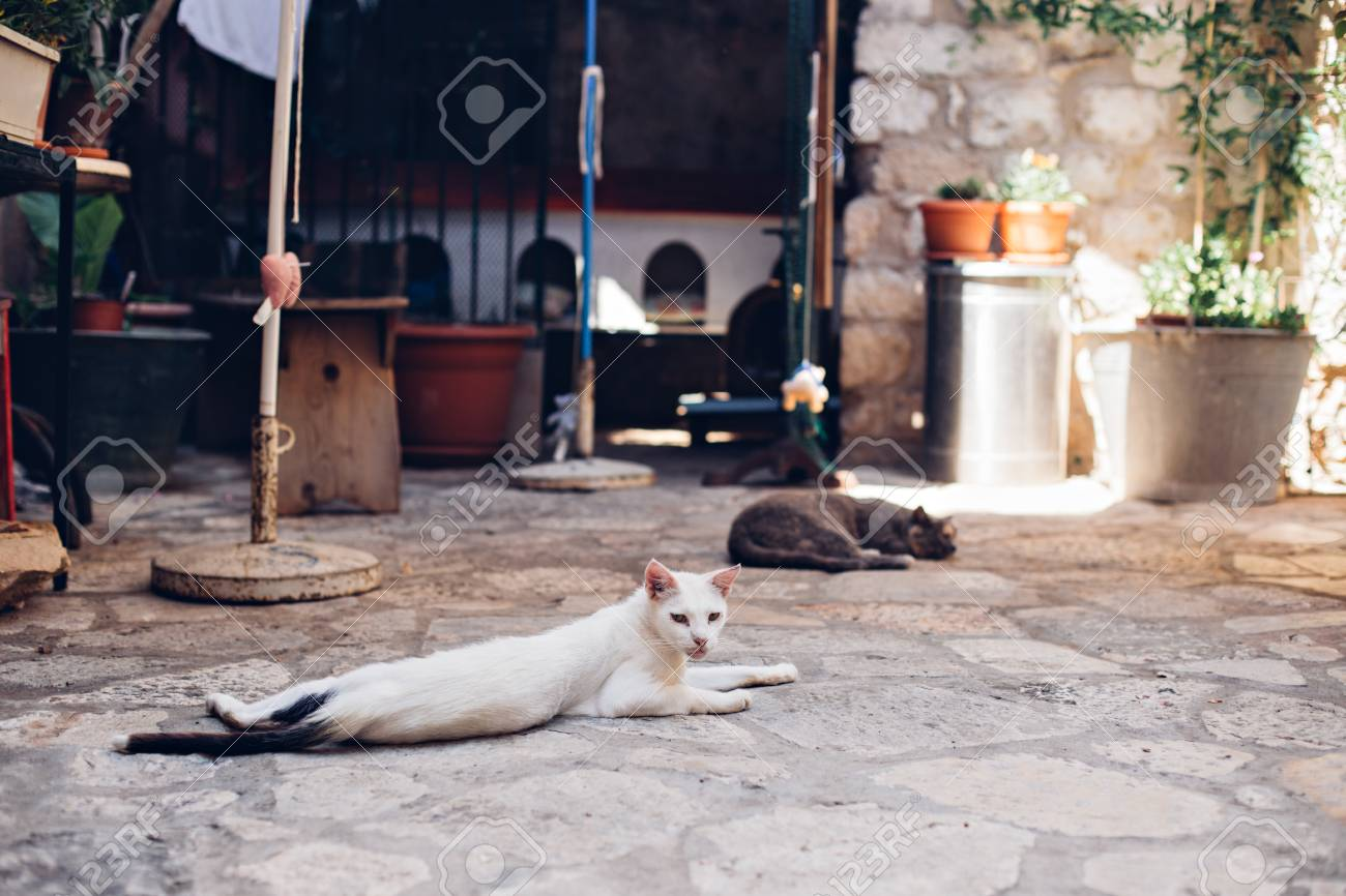 Skinny sad lonely white dirty stray cat lays sprawled on cobbled floor, lazy and sleepy in morning sun, in old european town - 86878098