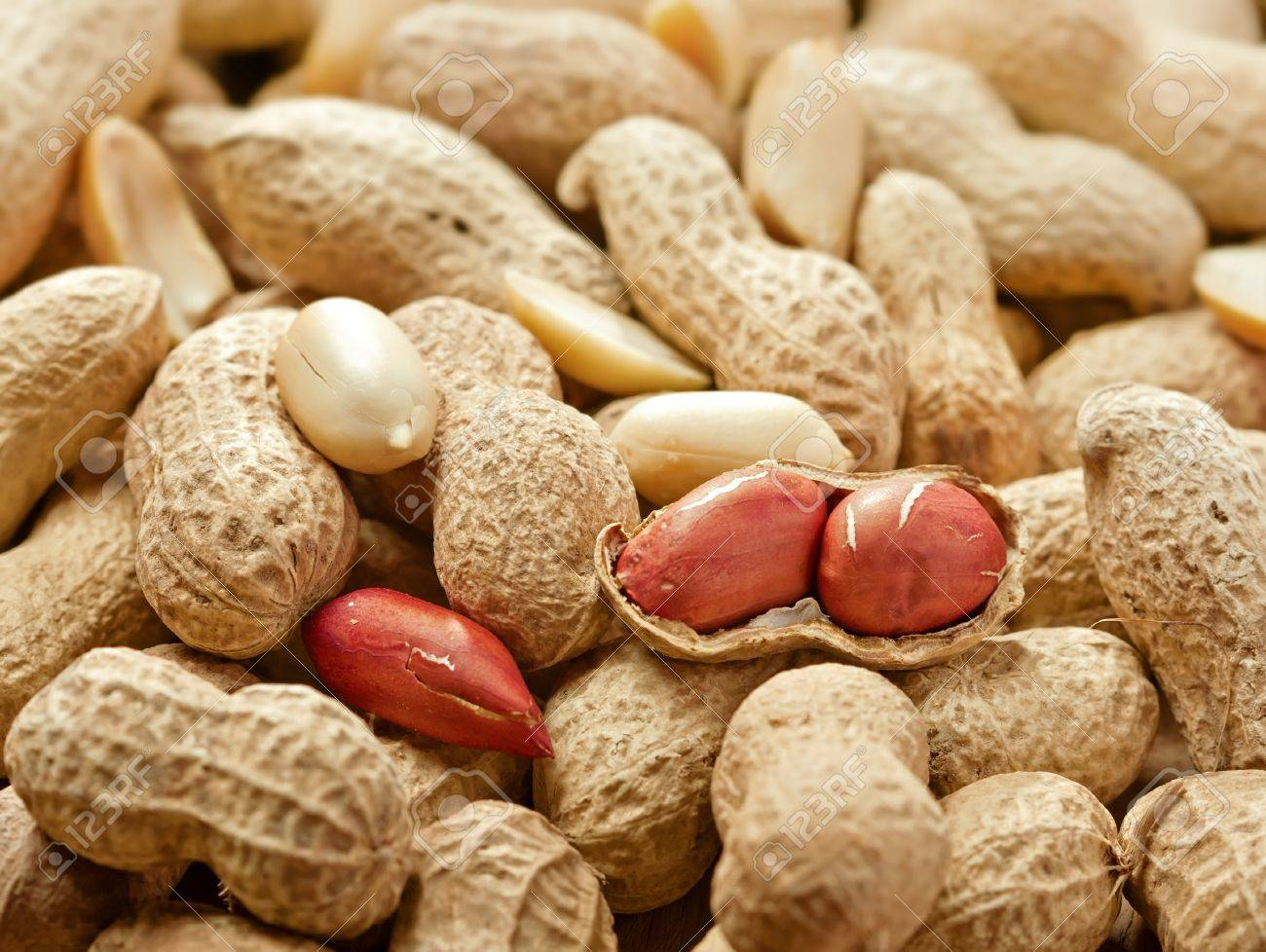 Peeled peanut andl peanuts in shell, studio shot Stock Photo - 14119735