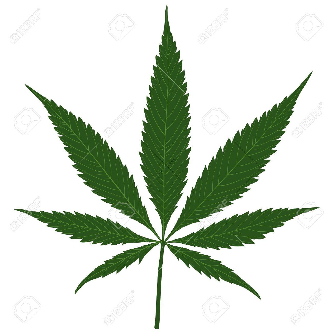 Marijuana (Cannabis) - Hemp leaf illustration Stock Vector - 10277818