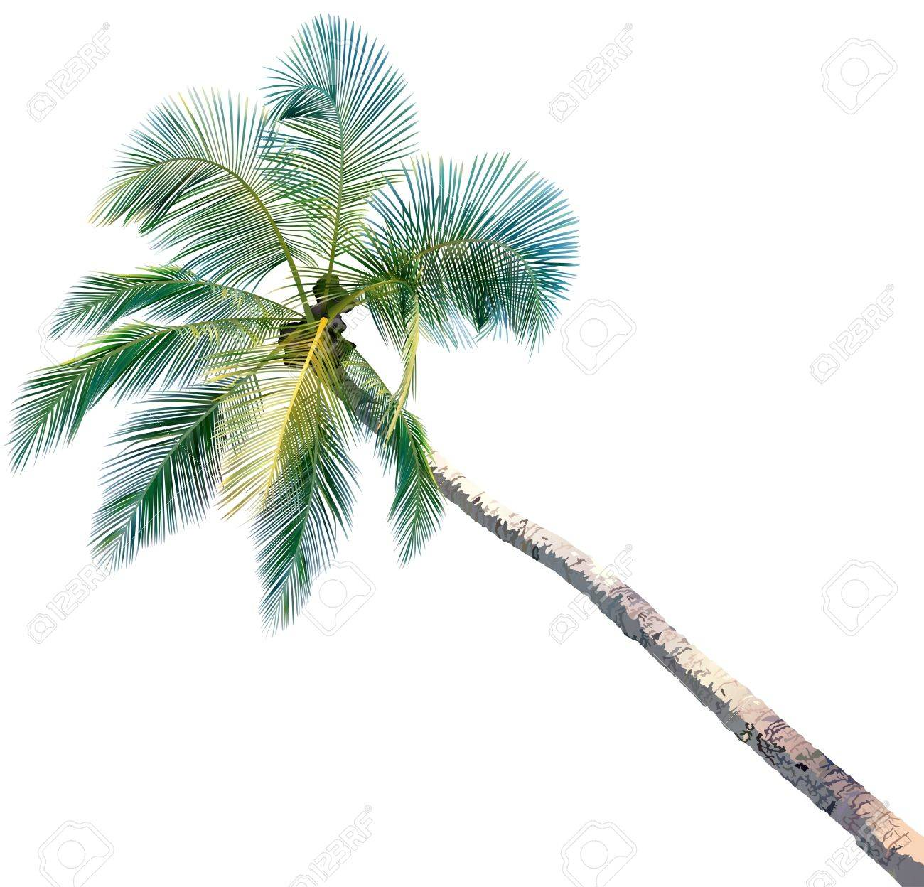 Palm Tree - colored and detailed illustration, vector Stock Vector - 12868239