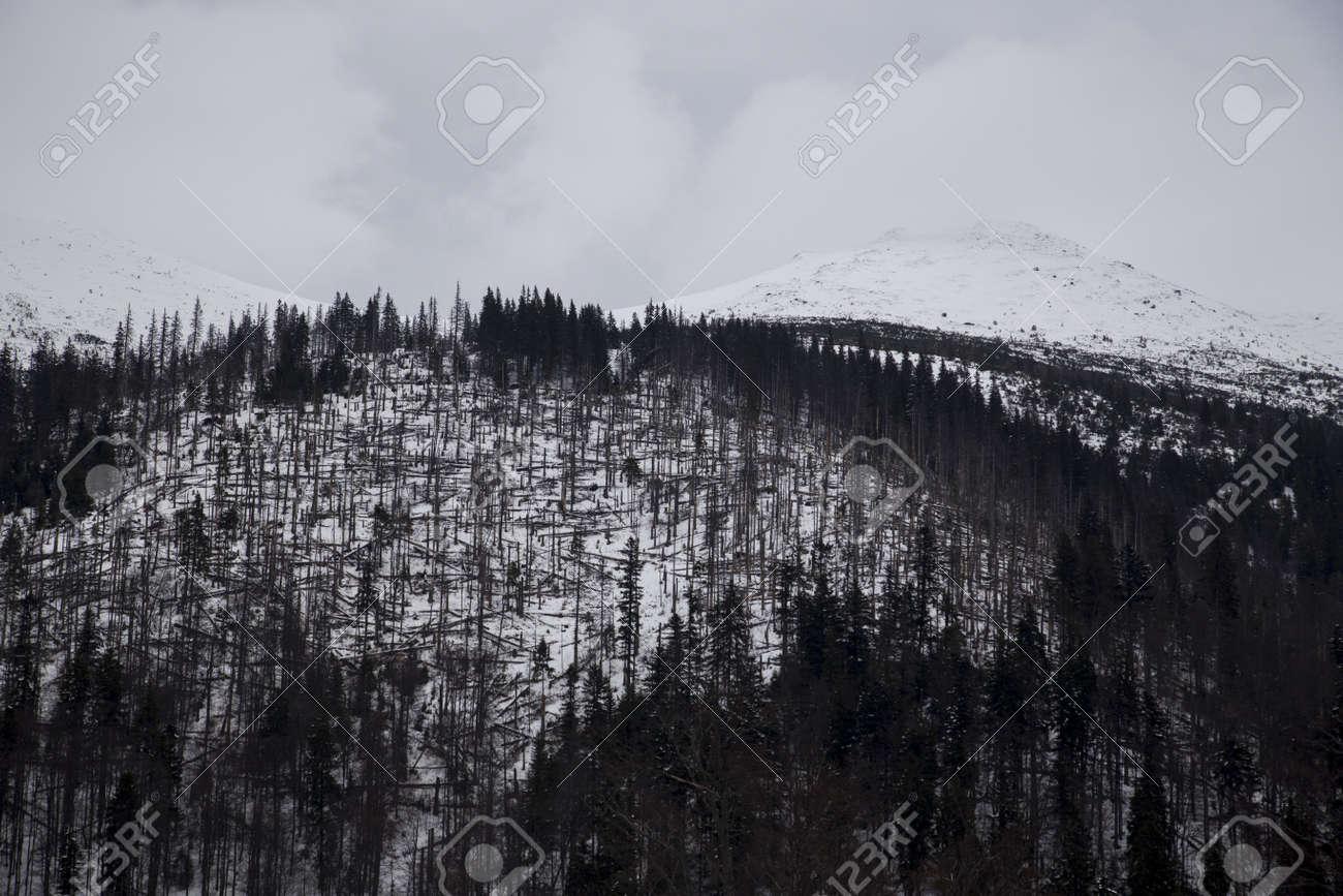 snow mountain Slovakia ski winter Jasna Europa - 164717673