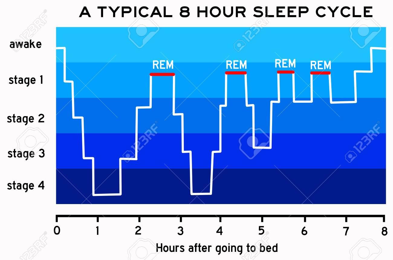 illustration - sleep cycle illustration