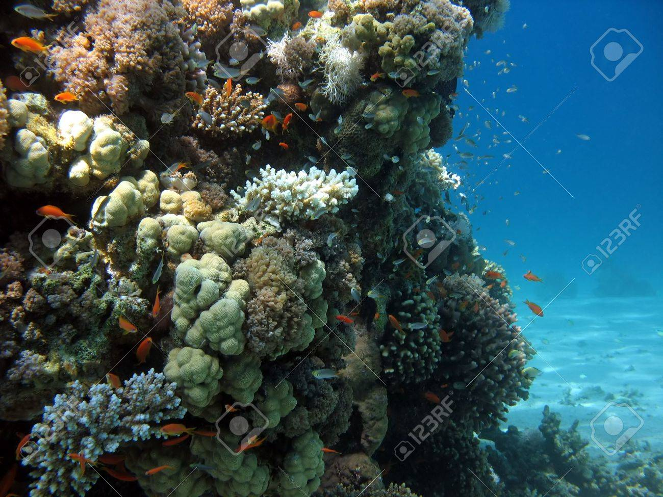 A picture of a coral reef. shot in the Red Sea Stock Photo - 1164469