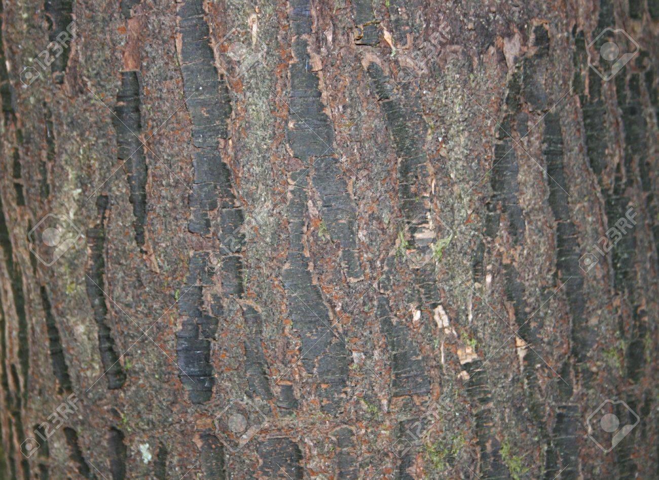 Tree Bark Texture Stock Photo - 13366739