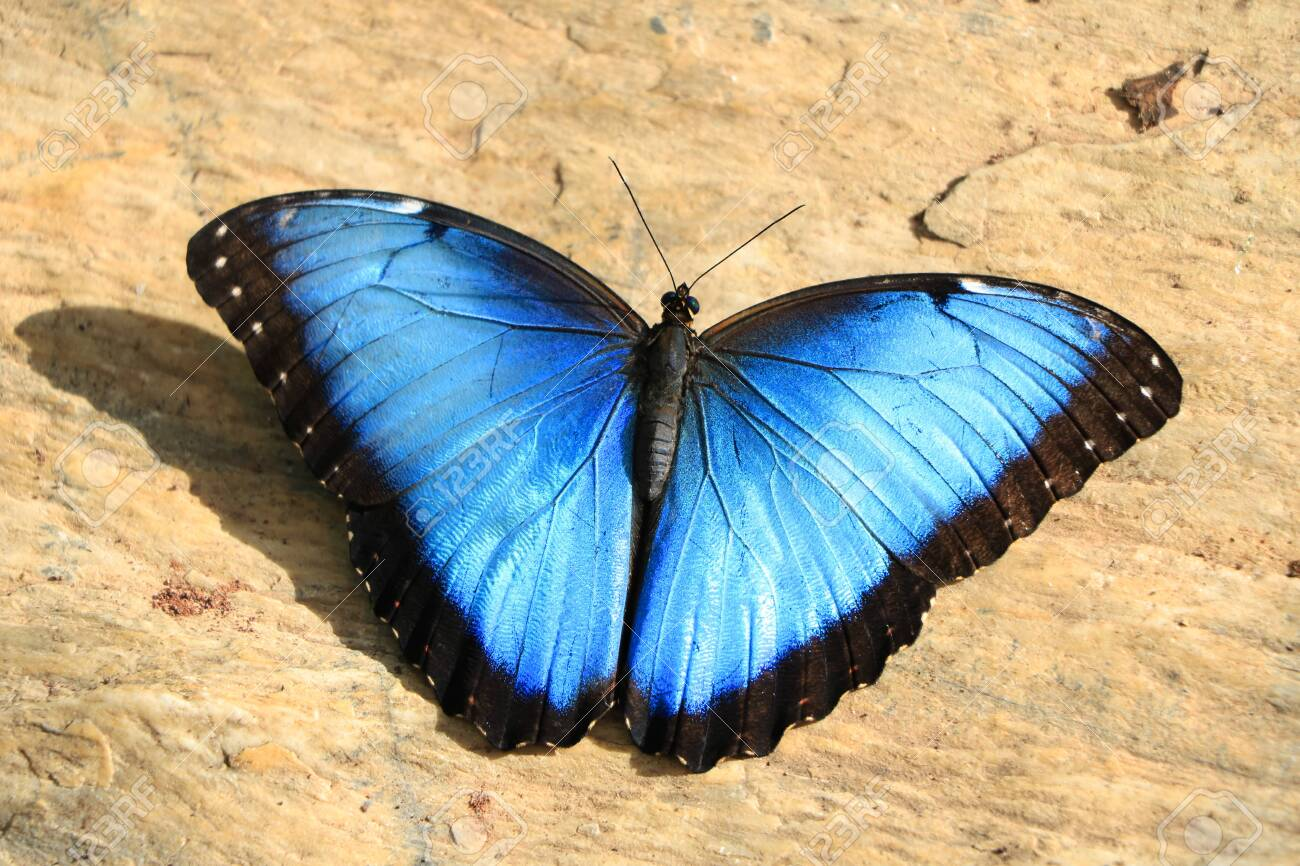 Blue Butterfly on Floor, Close Up - 139307445