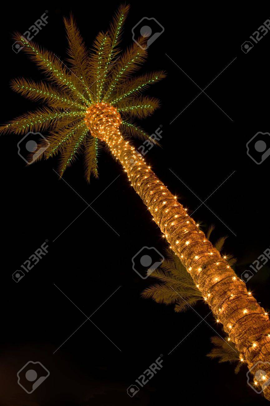 Palm Tree And Christmas Lights Stock Photo Picture And Royalty Free Image Image 12635537