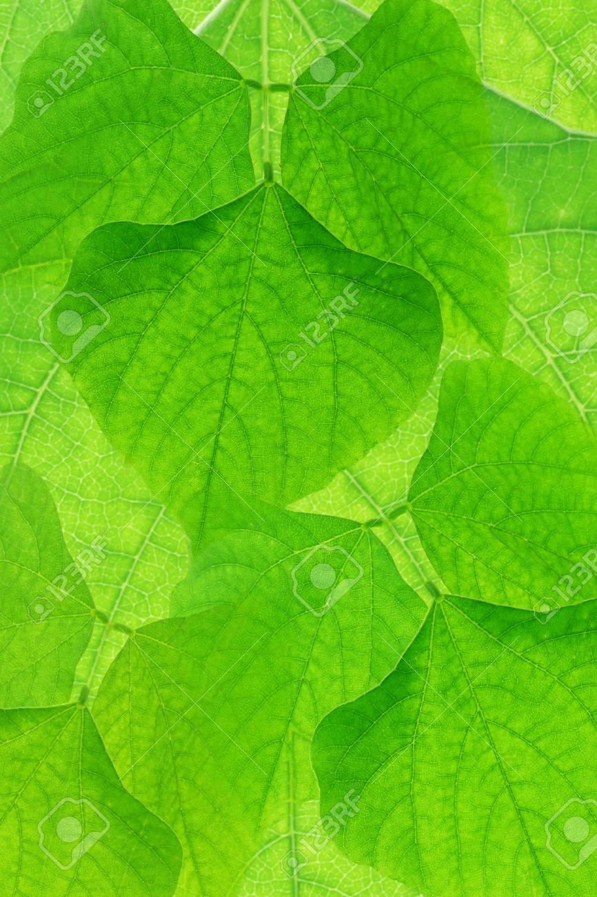 Immagini Stock Primo Piano Di Sfondo Verde Foglie Image 9853725