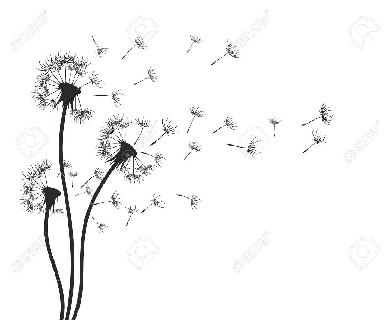 Dandelions on a wind a sketch. - 50704620