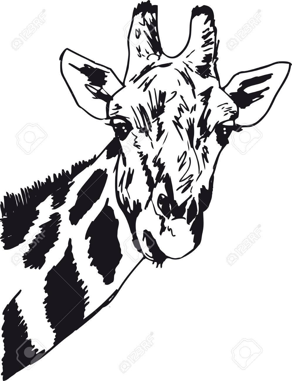 434 one giraffe stock vector illustration and royalty free one