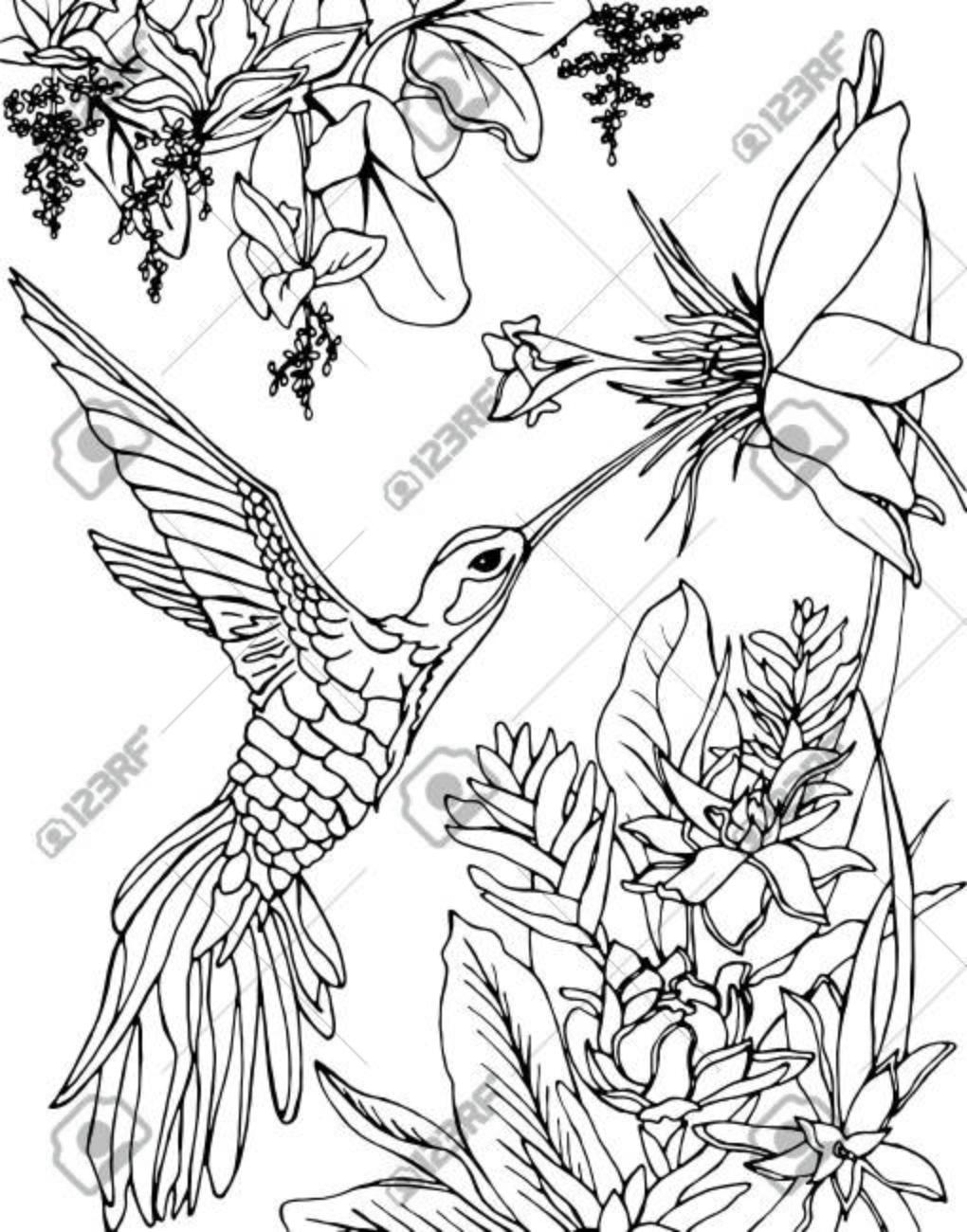 Colibrí Volando Bajo Las Flores Y Bebiendo Néctar. Zentangle ...