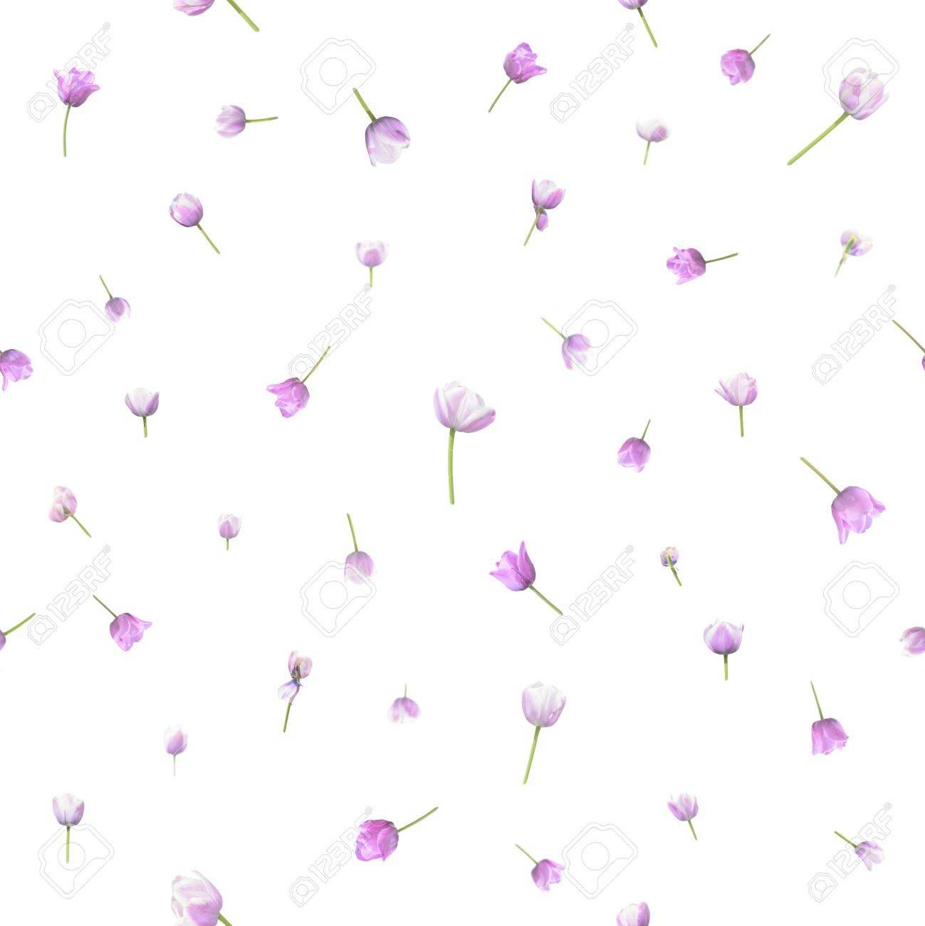 Répétitif, fleur fond transparent de 41 photographies différentes de  tulipes de deux spécimen similaire, dans la profondeur de champ, isolé sur  blanc.