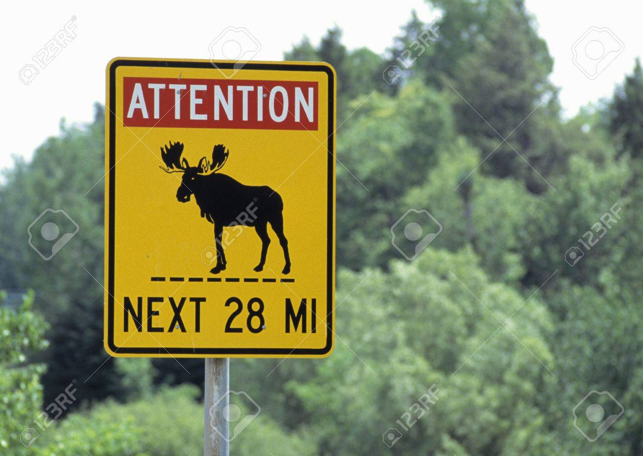 moose crossing sign stock photo picture and royalty free image