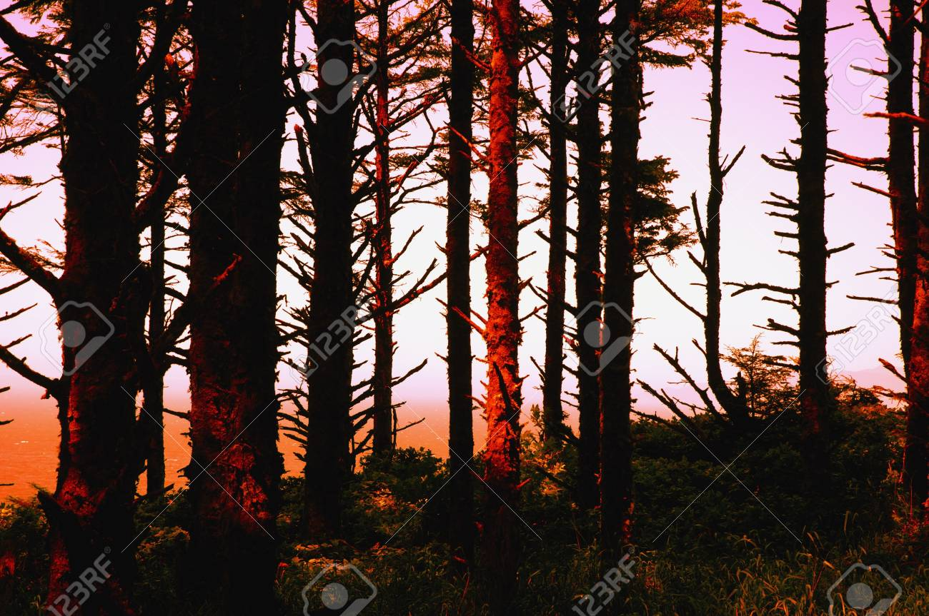 Sunset through the forest trees Stock Photo - 5713244