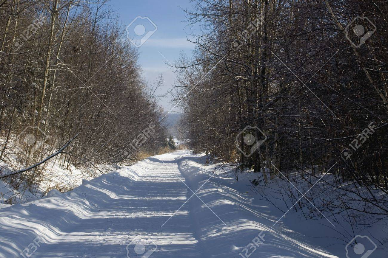 Bare trees line a snow covered country road Stock Photo - 7328840