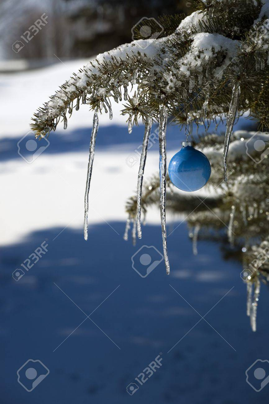 Pine tree covered in snow and icicles, with blue Christmas decoration Stock Photo - 7268343