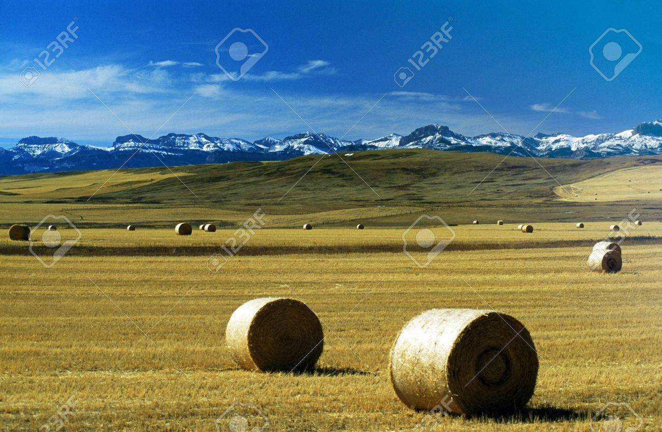 Montana, USA; Hay bales on a field, with snow-covered mountains in background Stock Photo - 7328864
