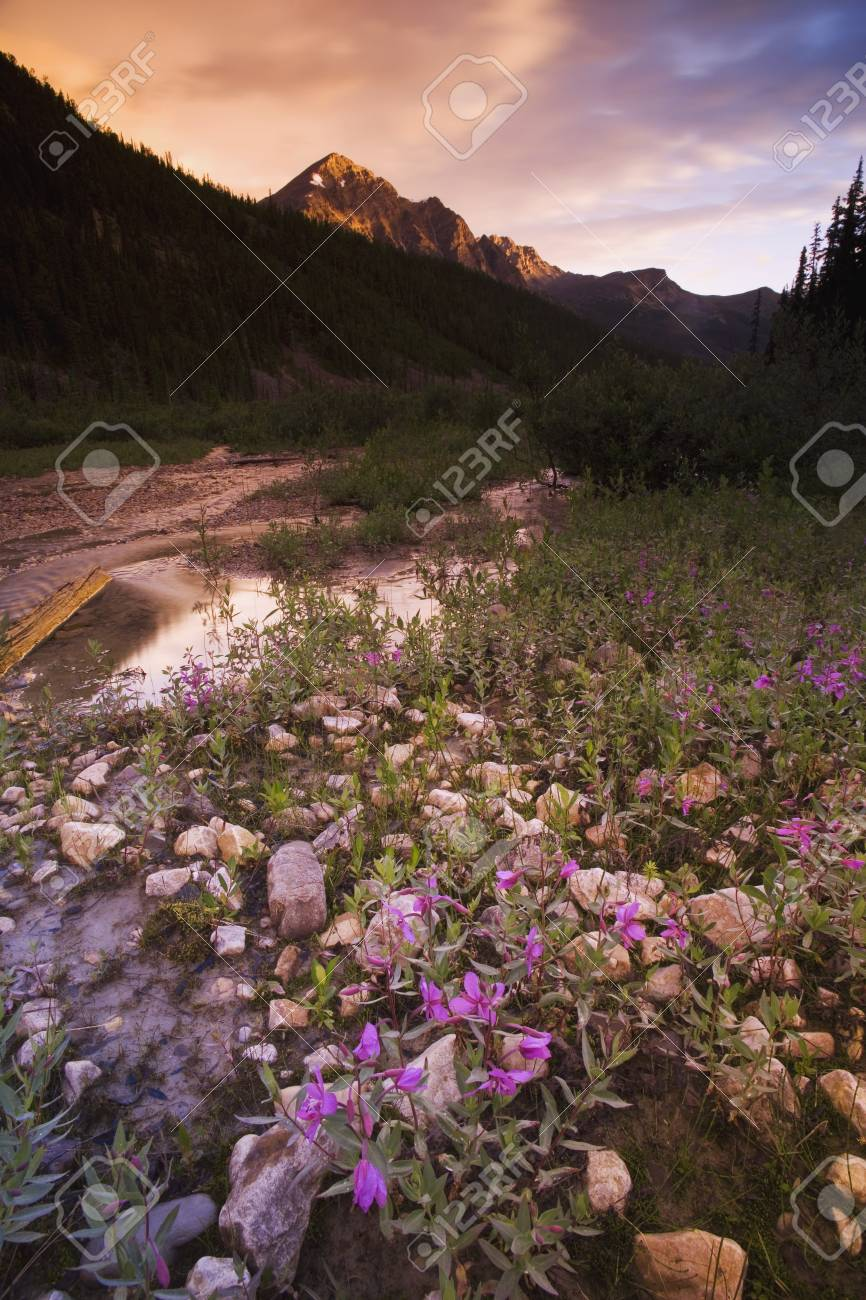 Beautiful mountain scene Stock Photo - 7190533