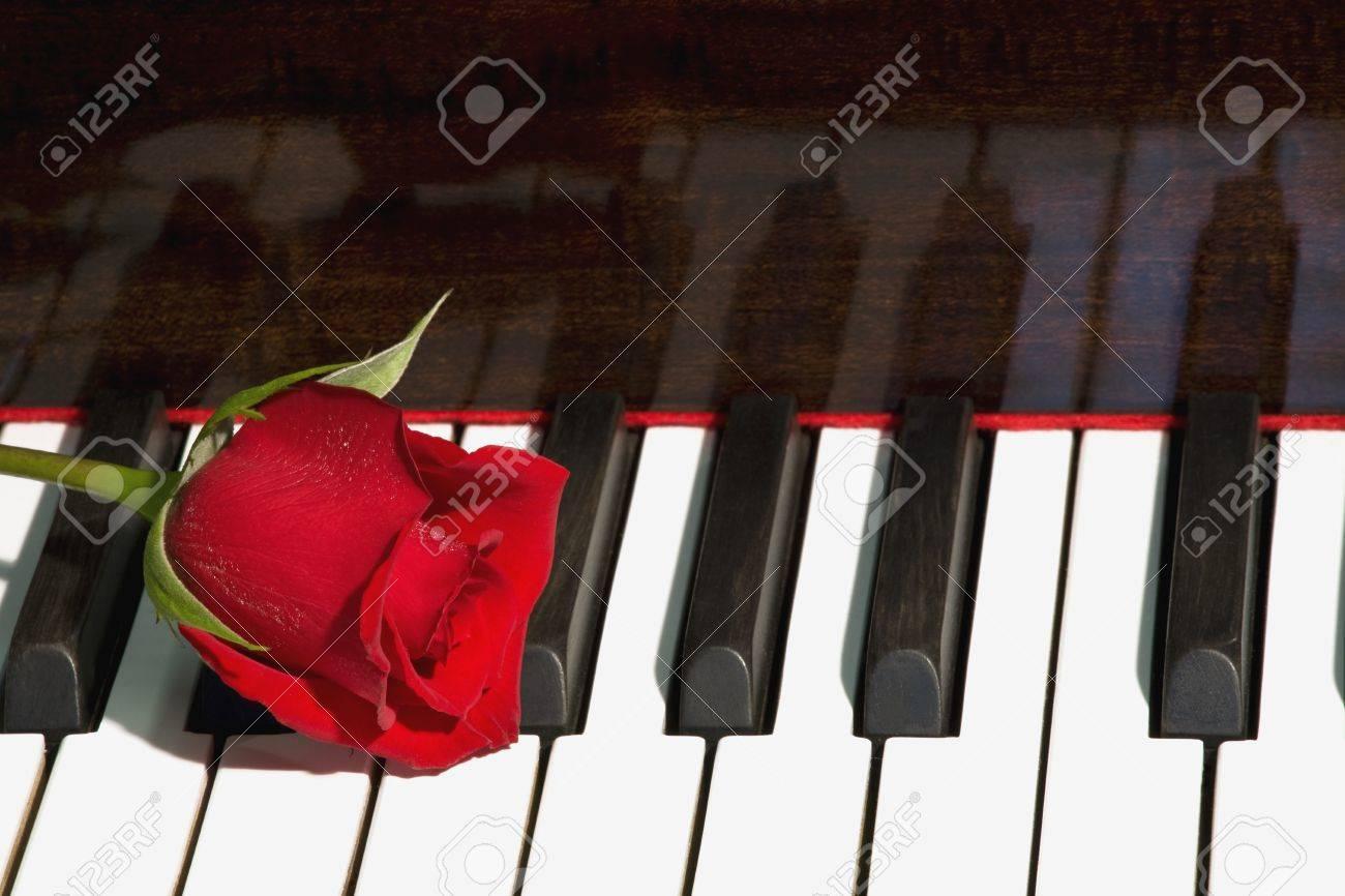 Rose on piano Stock Photo - 7205574