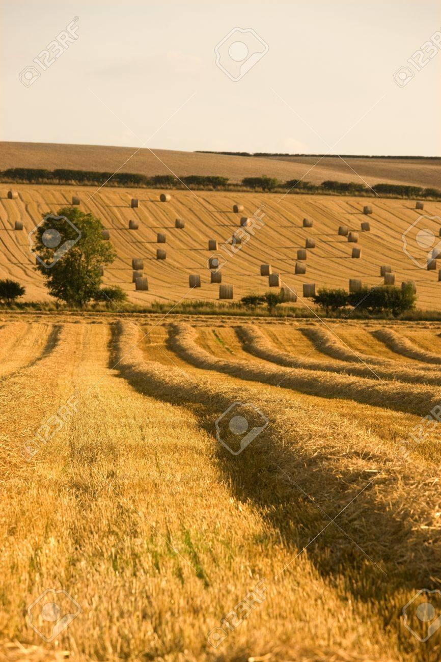 Farmer's field, North Yorkshire, England Stock Photo - 7551787