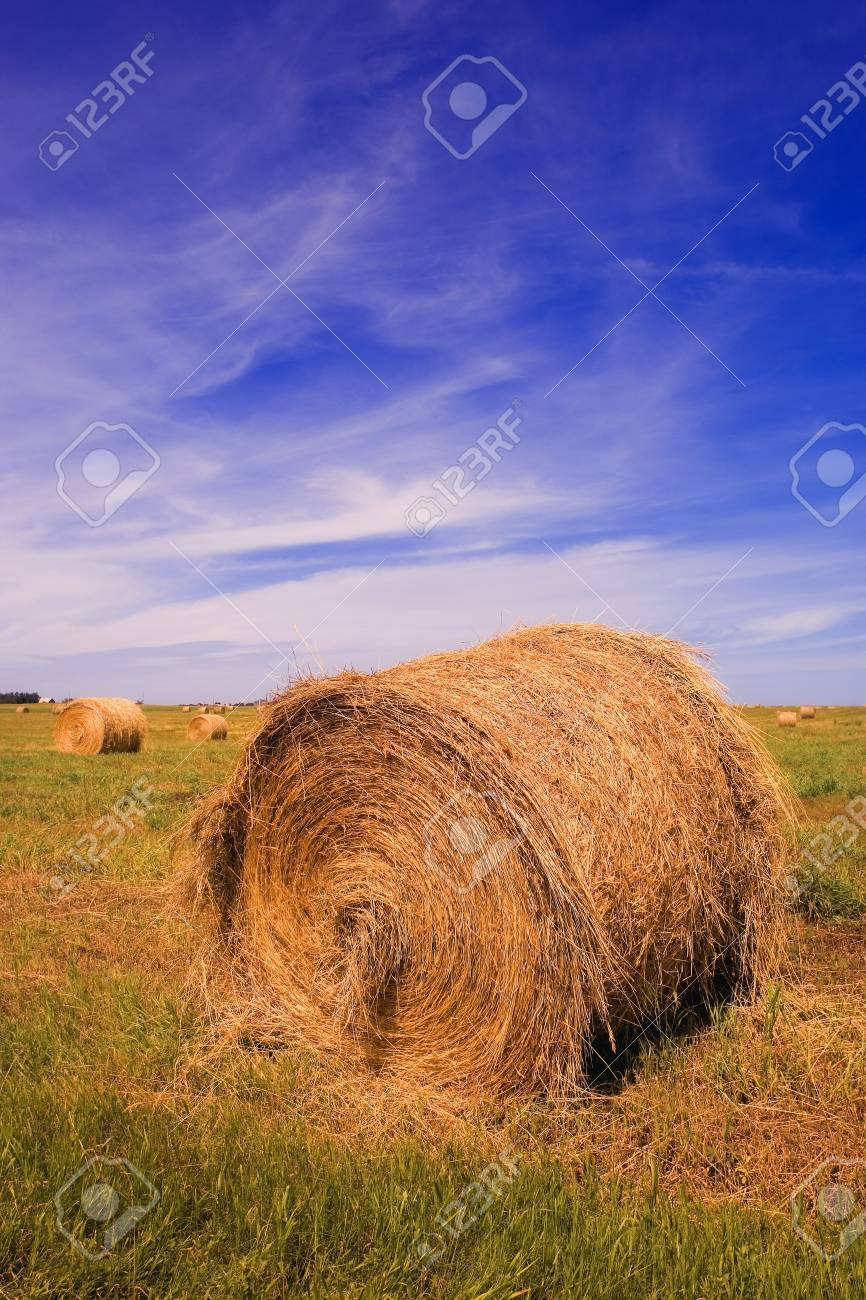 Hay bales in a field Stock Photo - 7559197