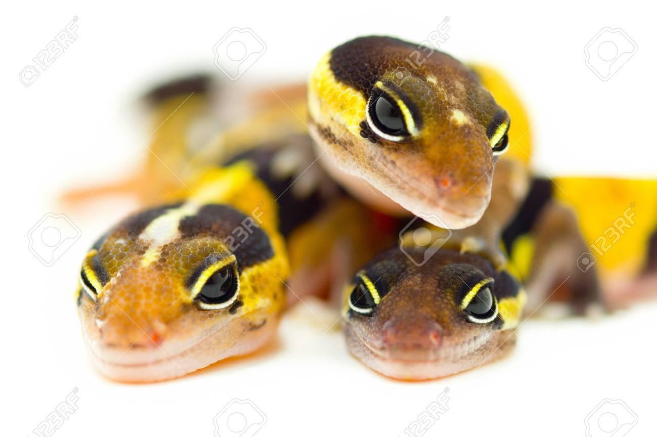Closeup of lizards' eyes Stock Photo - 7551503