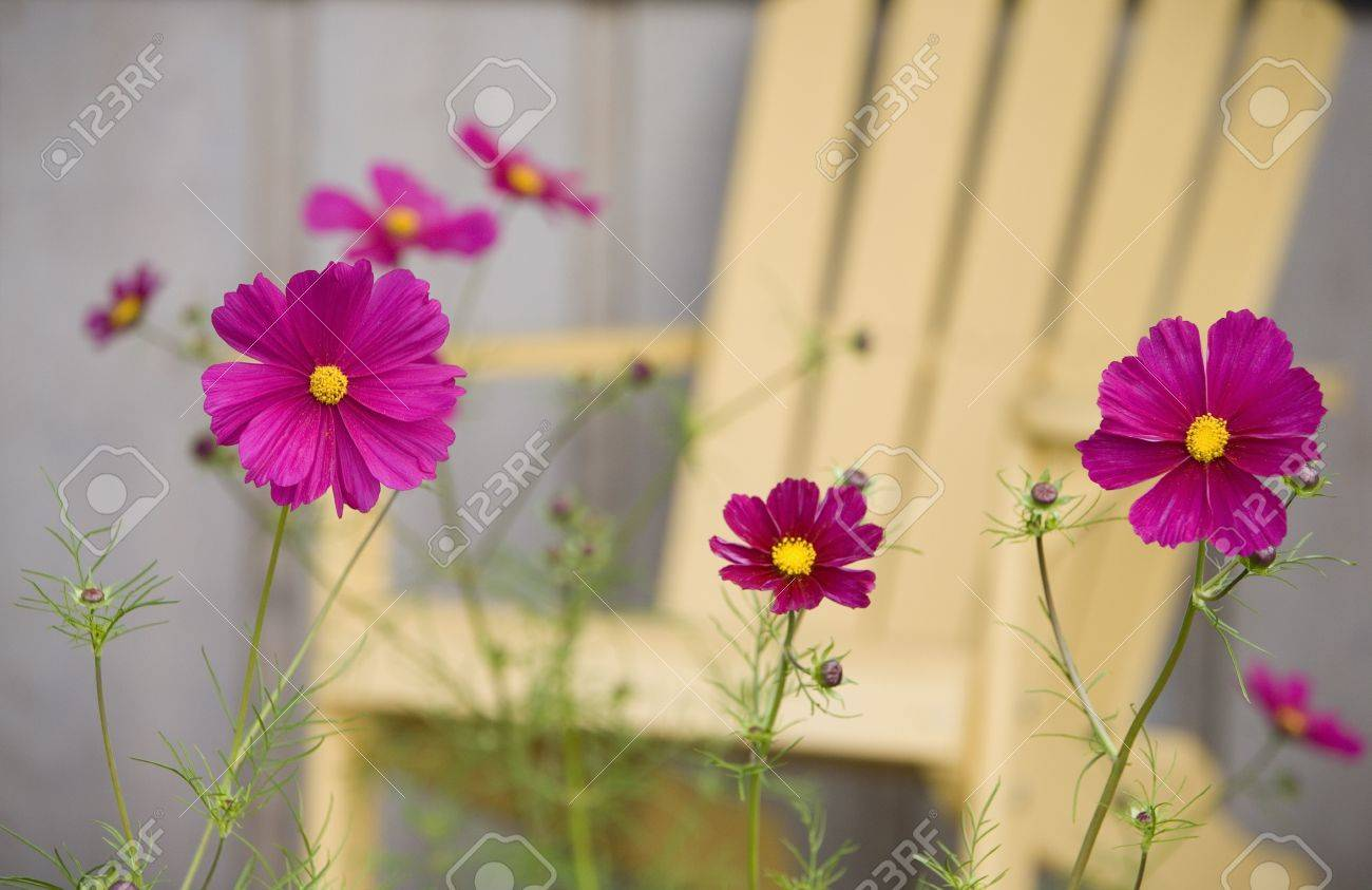 Purple flowers Stock Photo - 7559358