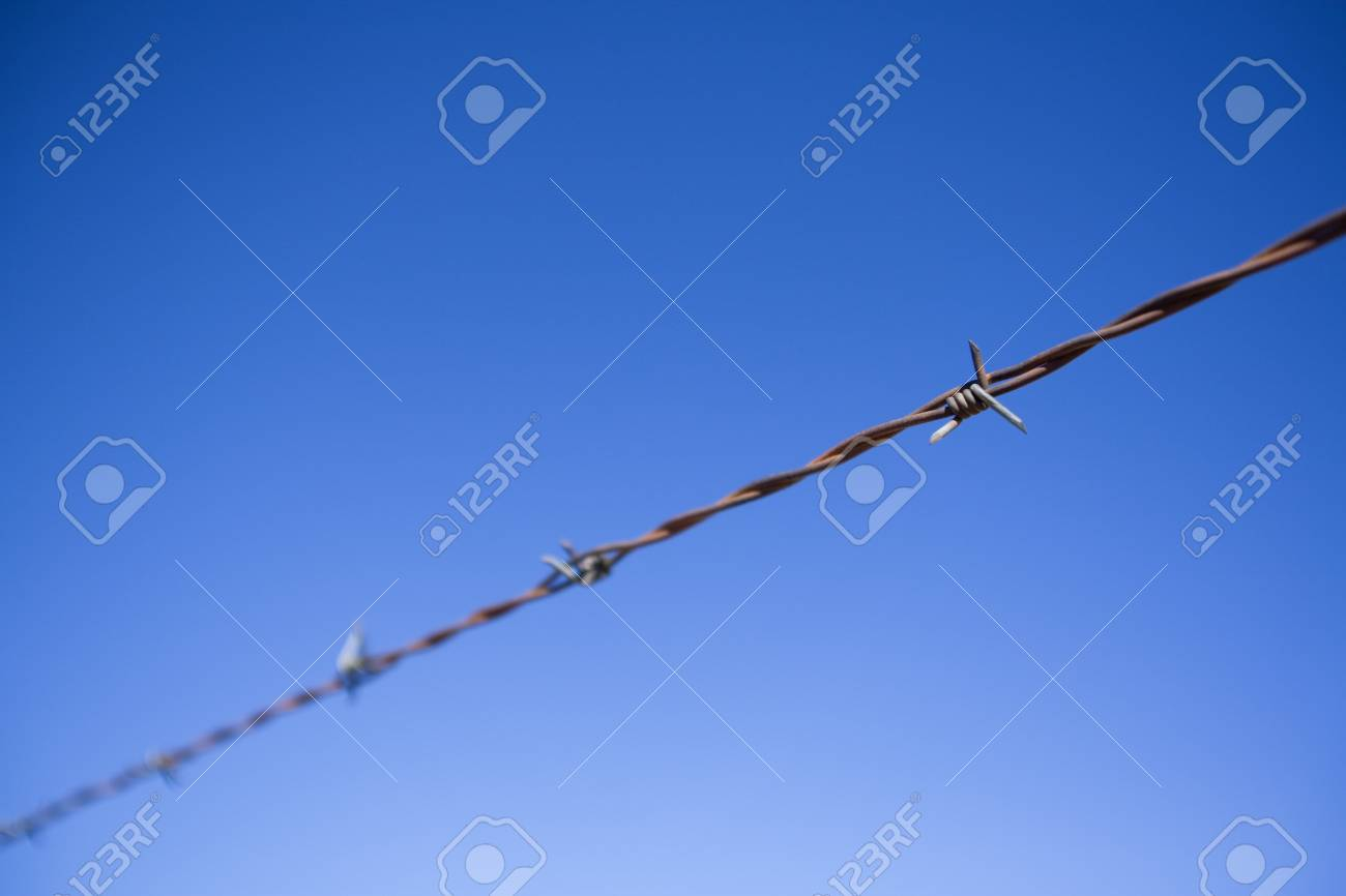Barbed wire fence Stock Photo - 8241771