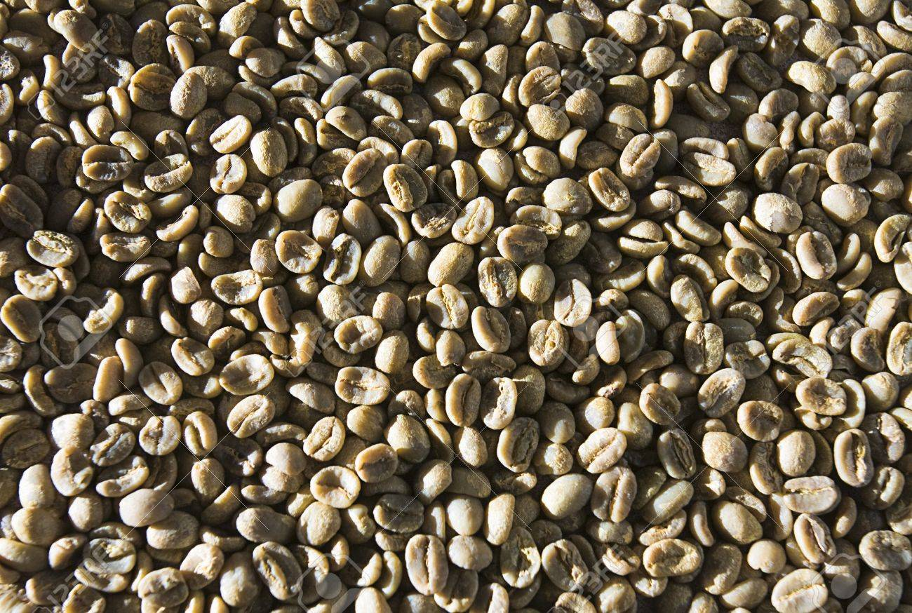 Unroasted Coffee Beans >> Green Unroasted Coffee Beans