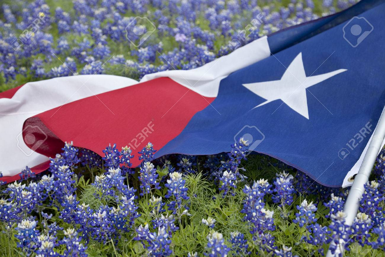 Low Angle View Of A Texas Flags Laying Among Bluebonnet Flowers