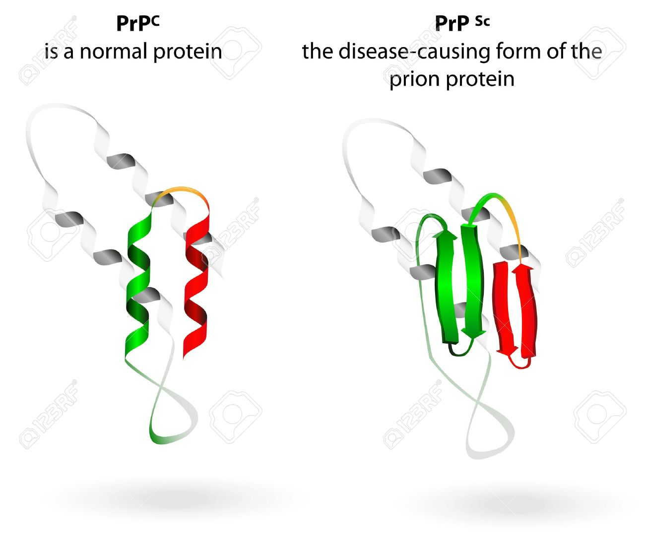 Prion Protein