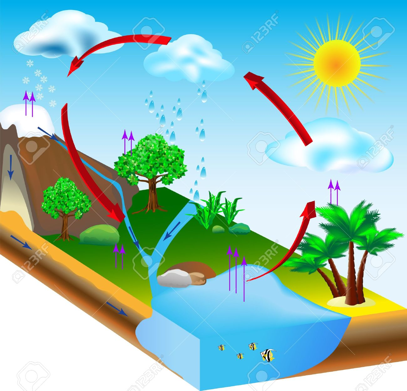 Water Cycle Diagram Condensation Evaporation And Environment Royalty Free Cliparts Vectors And Stock Illustration Image 18963147
