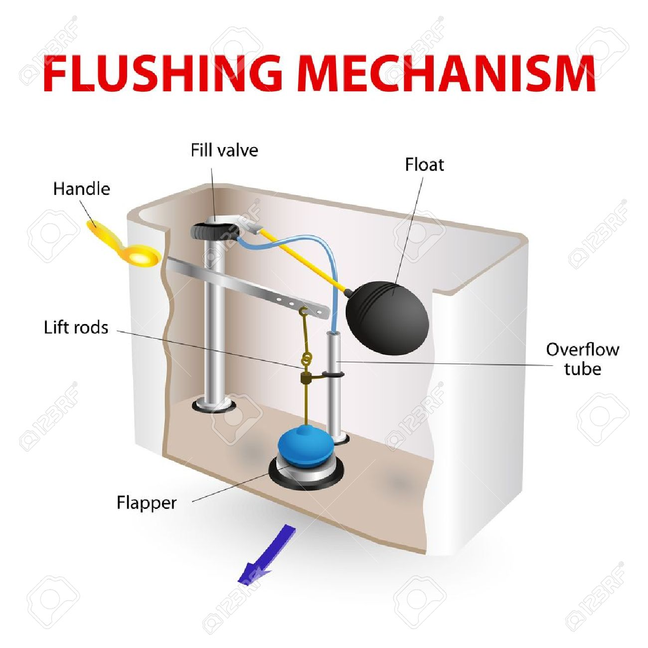 Toilet Flapper Valve Diagram - All Kind Of Wiring Diagrams •