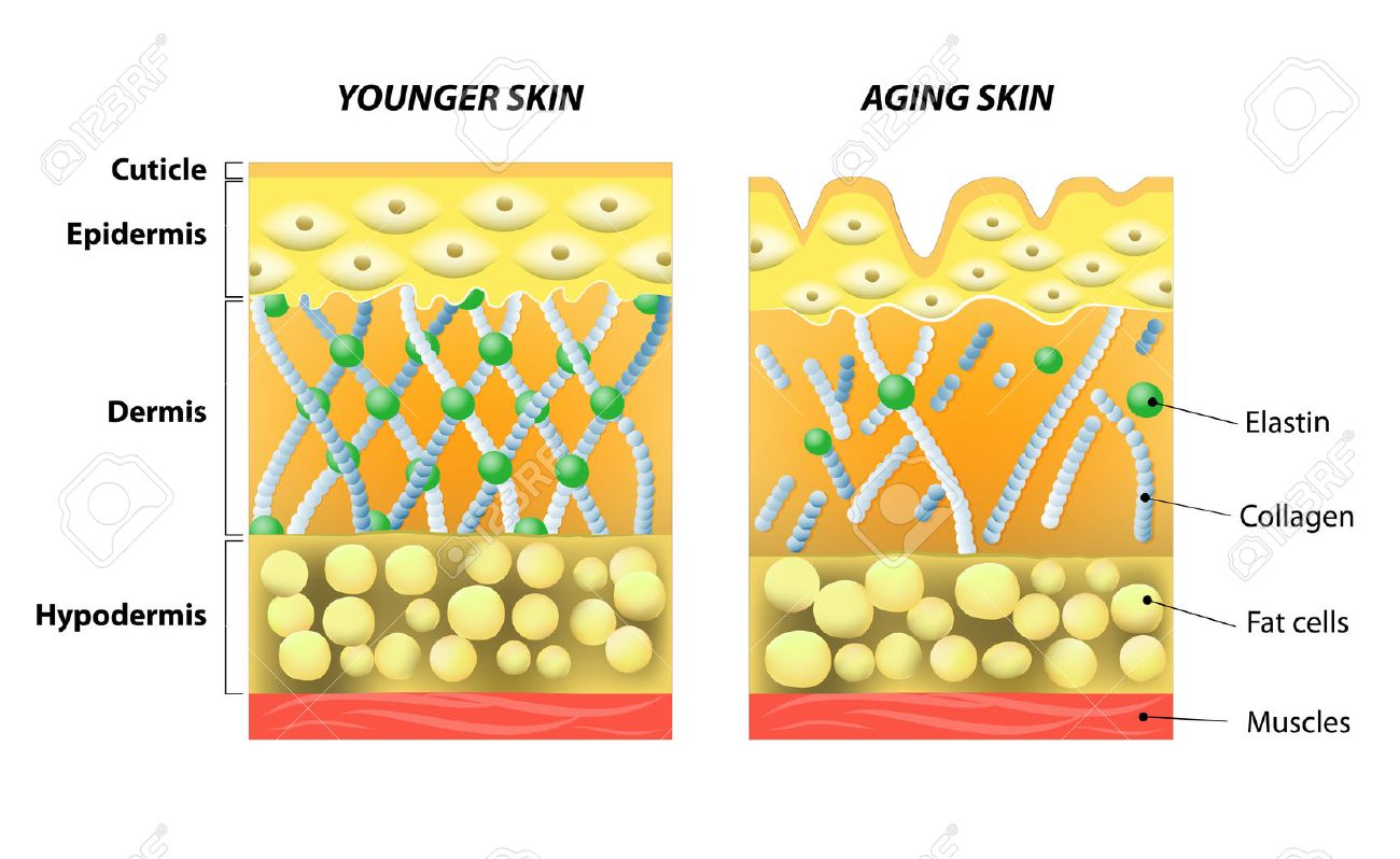 Risultati immagini per pelle giovane vecchia