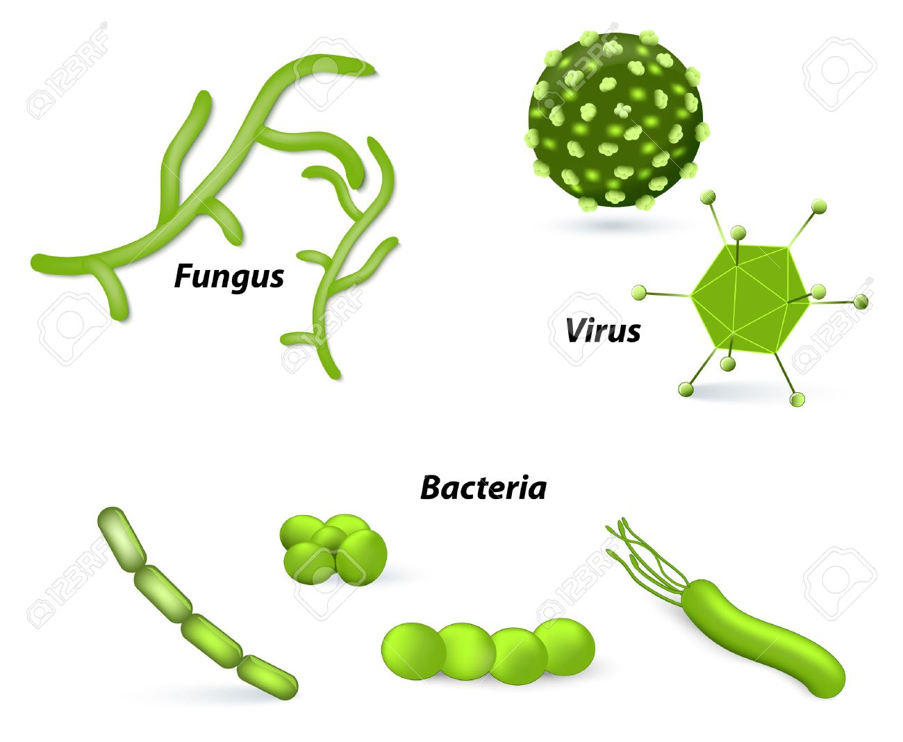 pathogen and microbes virus bacteria and fungi human disease