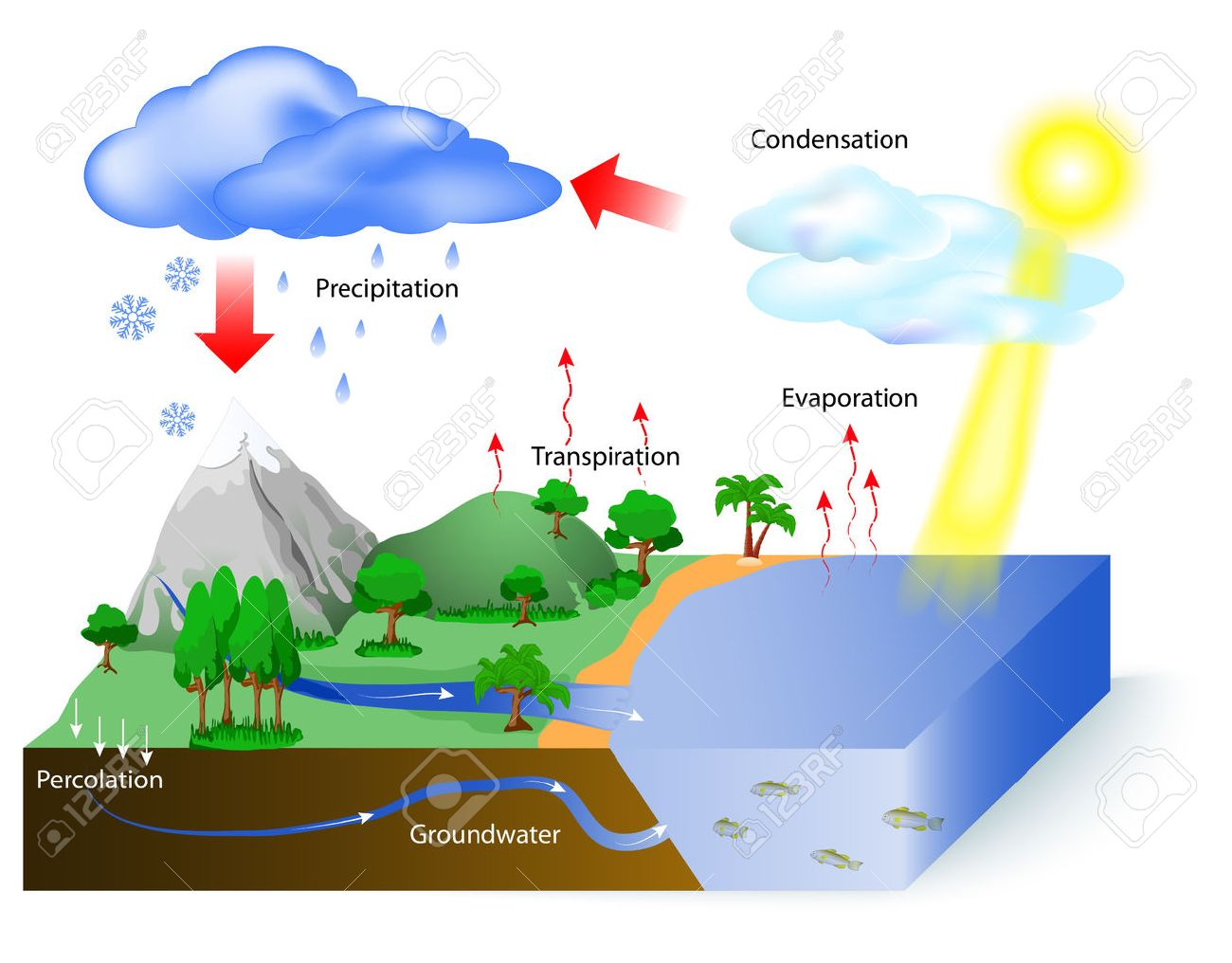 Water cycle diagram the sun which drives the water cycle heats water cycle diagram the sun which drives the water cycle heats water in ccuart Image collections
