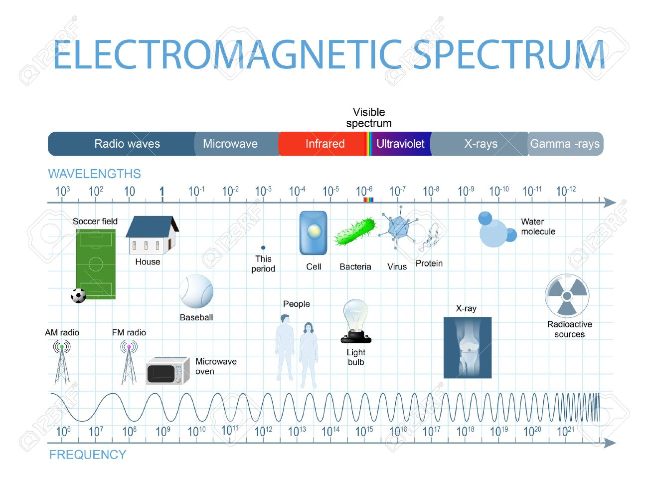 Electromagnetic Spectrum. The spectrum of waves includes infrared rays, visible light, ultraviolet rays, and X-rays. Human eyes are only sensitive to the range that is between wavelength 780 nanometers and 380 nanometers in length. - 63923662