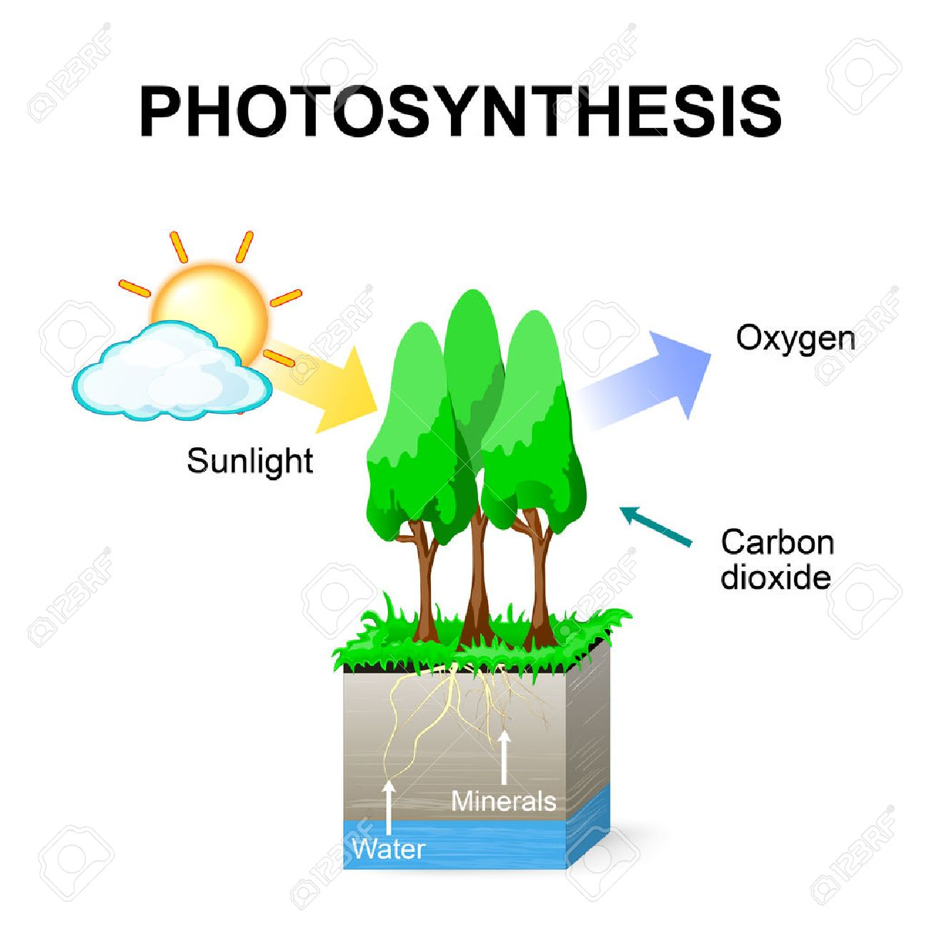 Photosynthesis vector schematic of photosynthesis in plants schematic of photosynthesis in plants stock vector 64914884 ccuart
