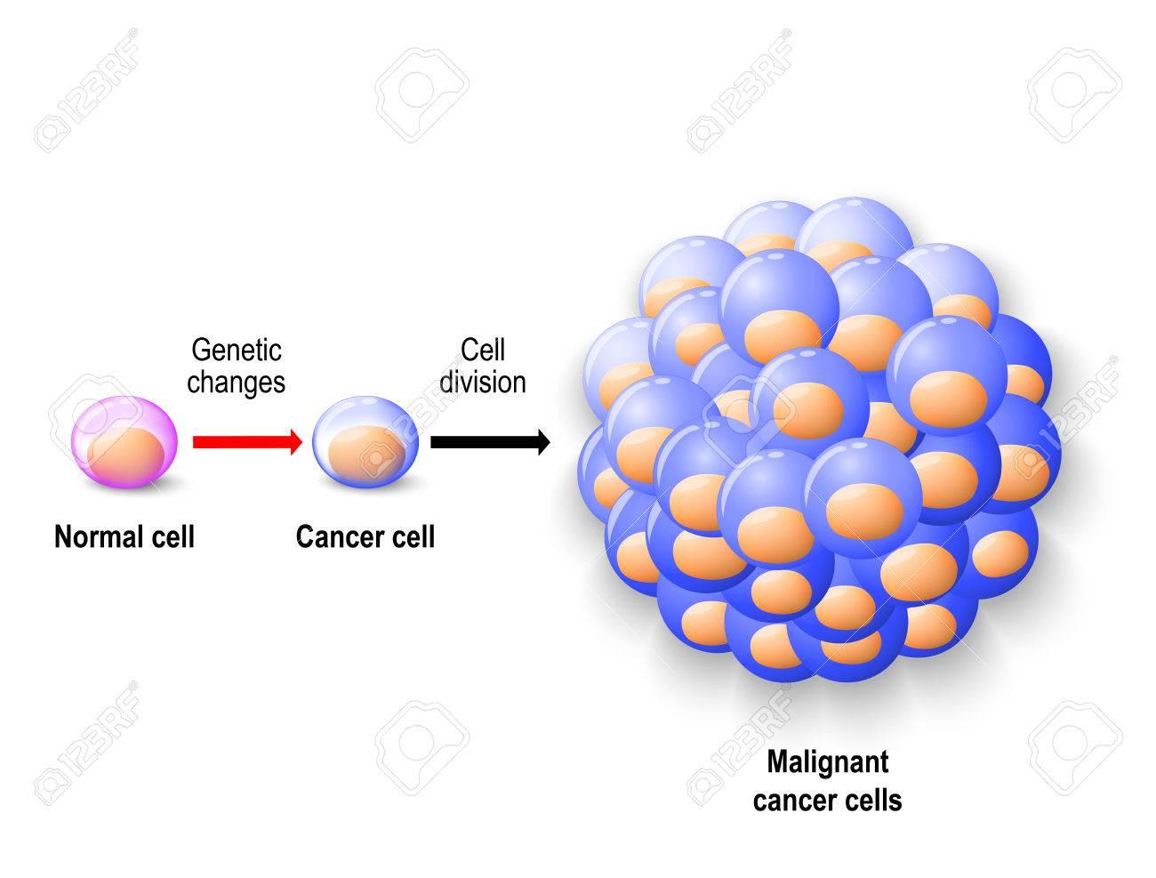 Normale Menschliche Zelle Zu Krebszellen Wieder Geboren, Und Wächst ...