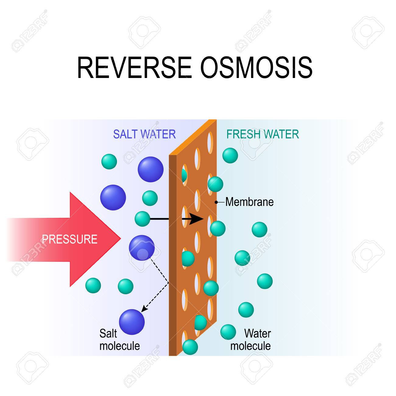 reverse osmosis. Desalination. The pressure water molecules seep through the semi-permeable membrane. - 79917598