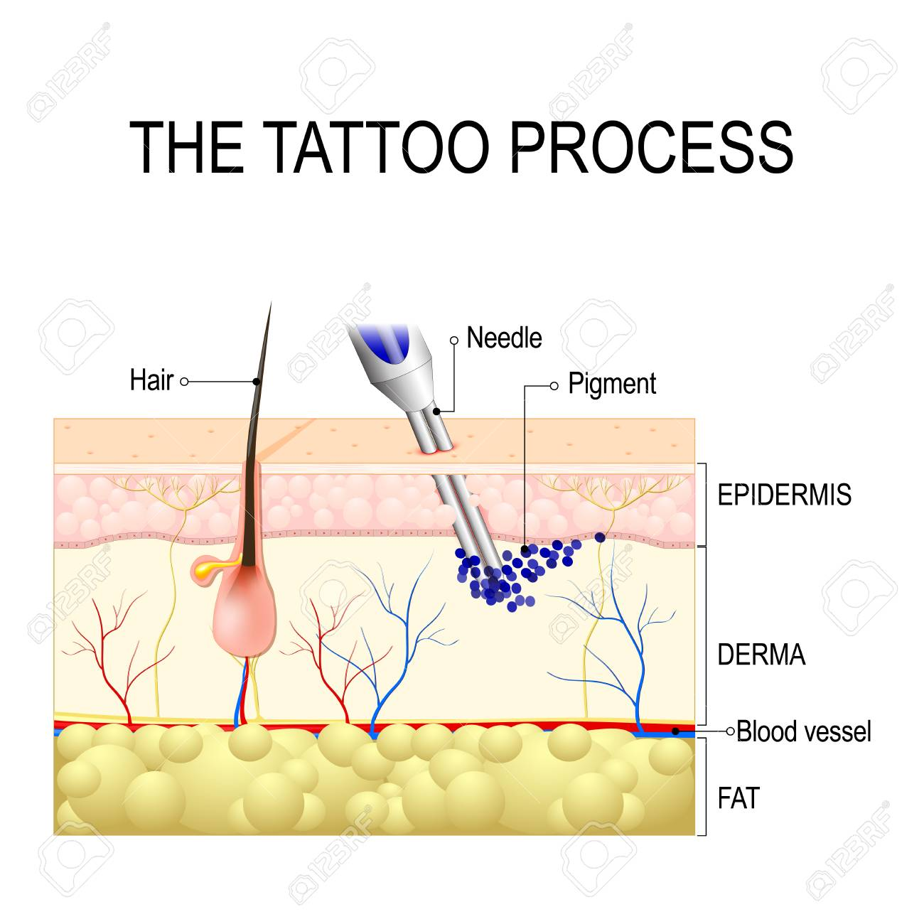 make a tattoo. How does it work?. tattooing process Close Up - 91000867
