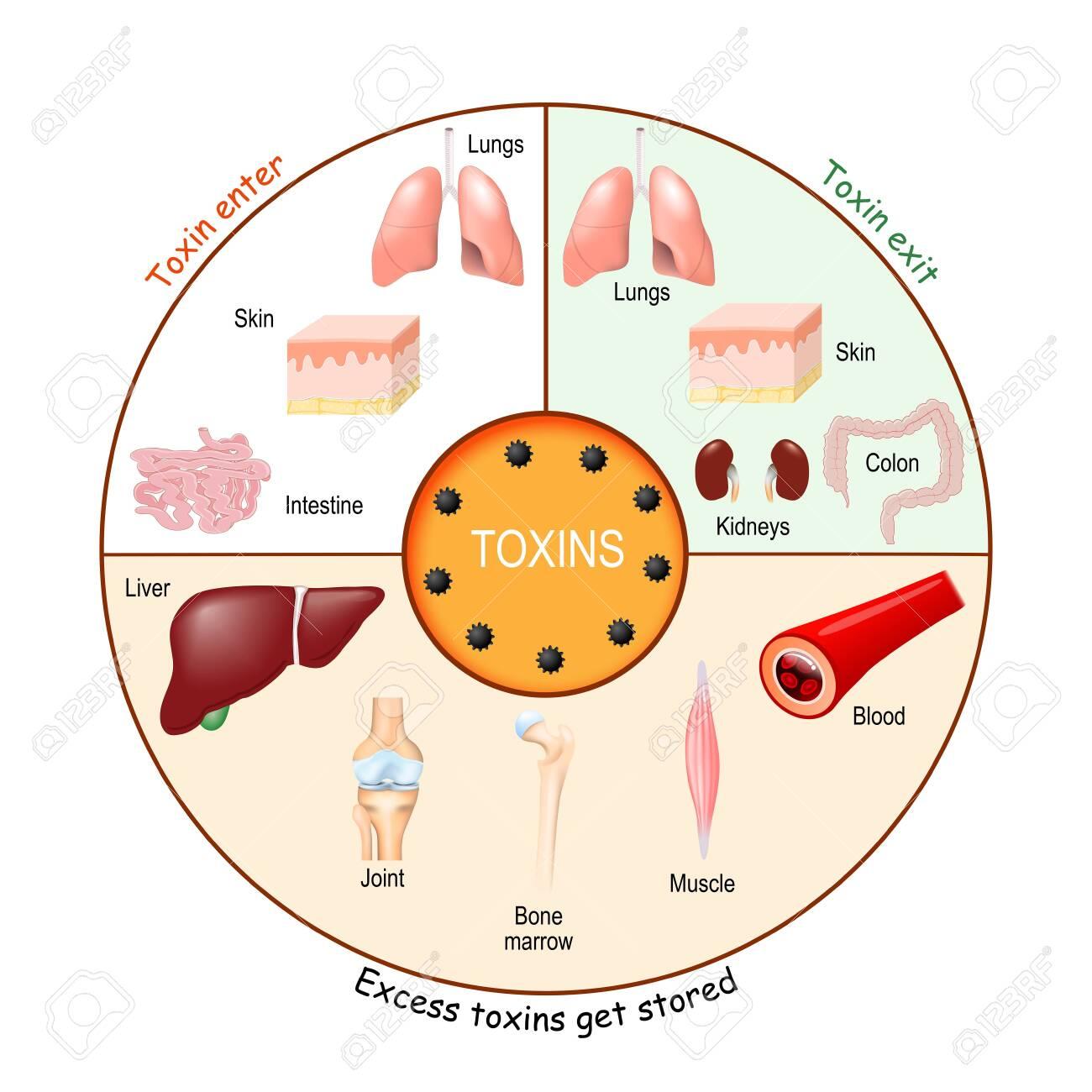 epidemiologia diphildobothriasis prevenirea antihelmintică
