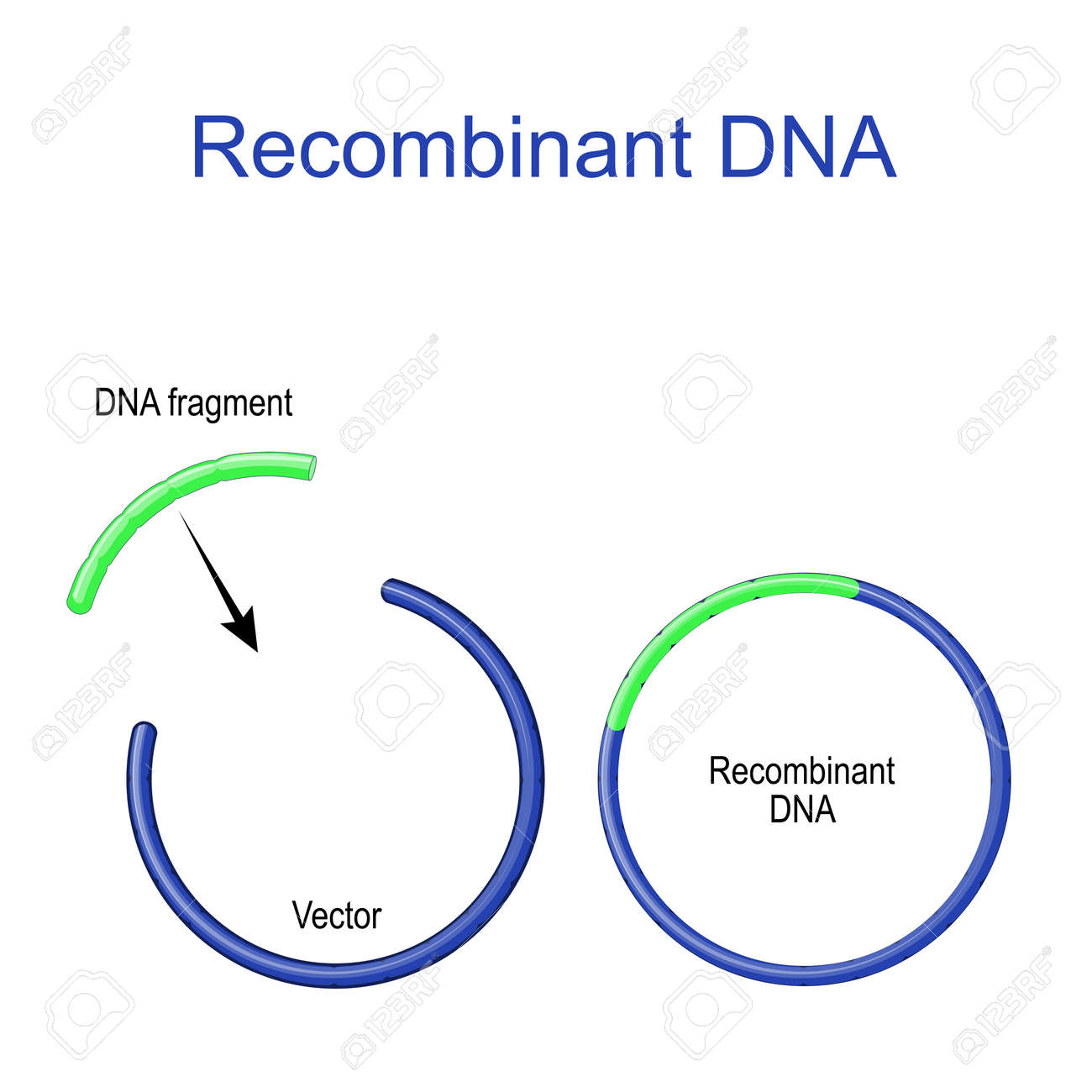 Plasmids and Recombinant DNA. foreign DNA fragment is inserted into a plasmid vector. Gene cloning. recombinant subunit vaccine. Molecular Biology. scientific research - 173872206