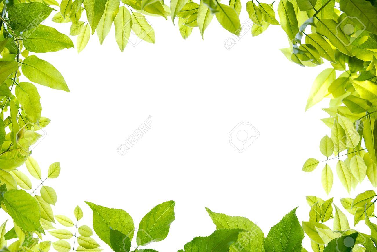 Marco Verde Sobre El Fondo Blanco Para Su Diseño Fotos, Retratos ...