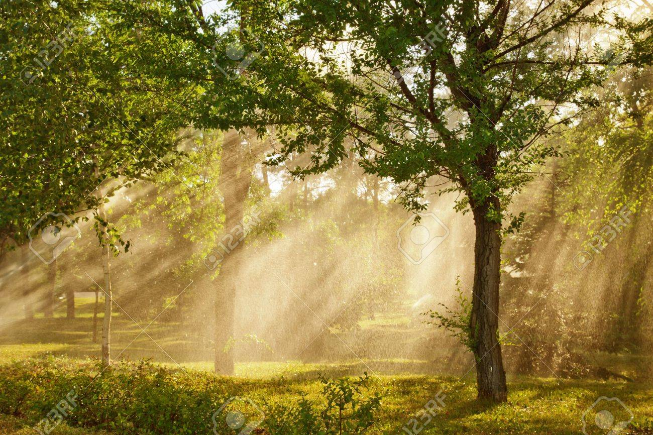 Shafts of sunlight bursting through the misty trees. Stock Photo - 9851884