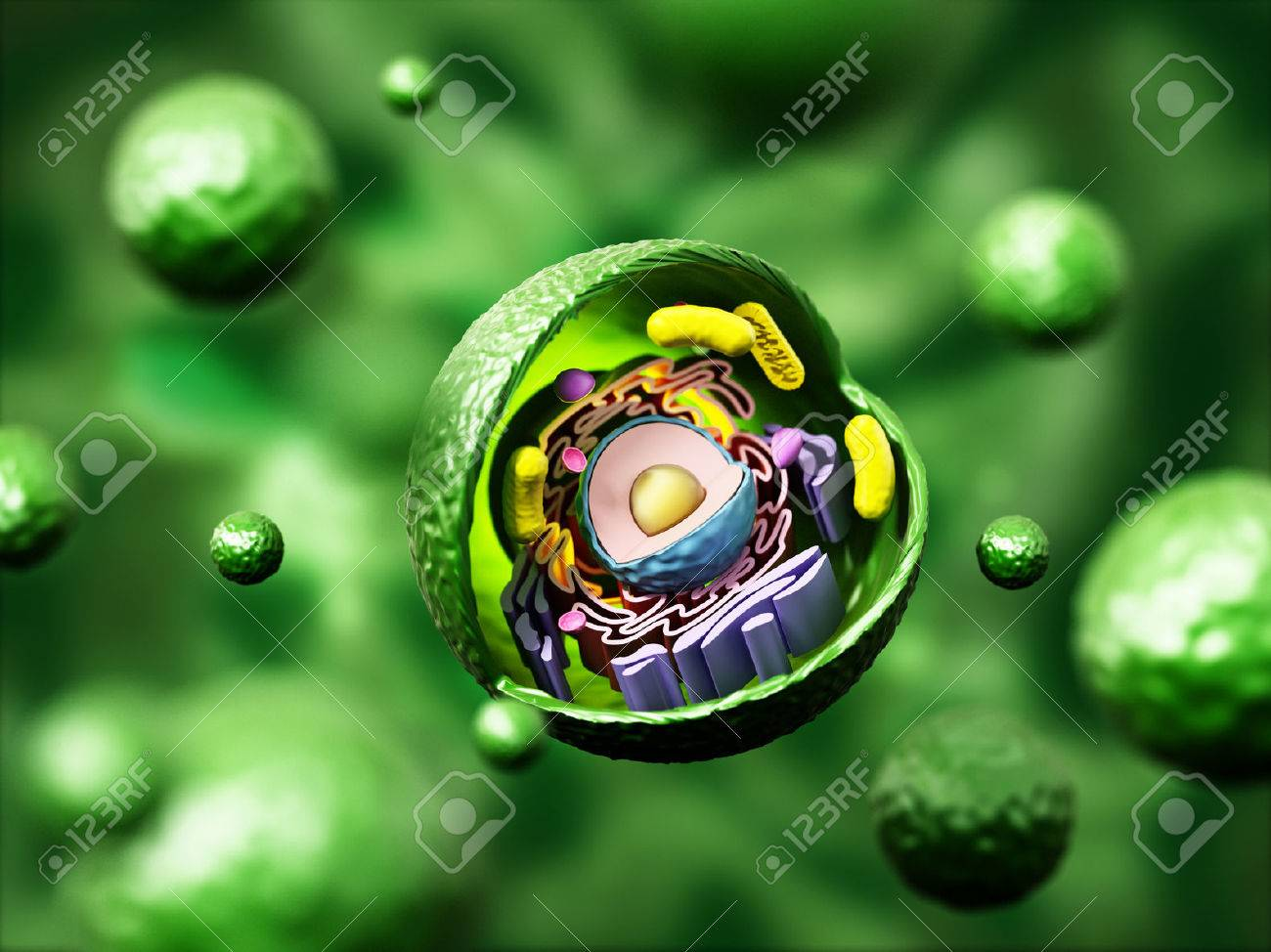 Swell Animal Cell Anatomy On Green Background 3D Illustration Stock Wiring 101 Mecadwellnesstrialsorg