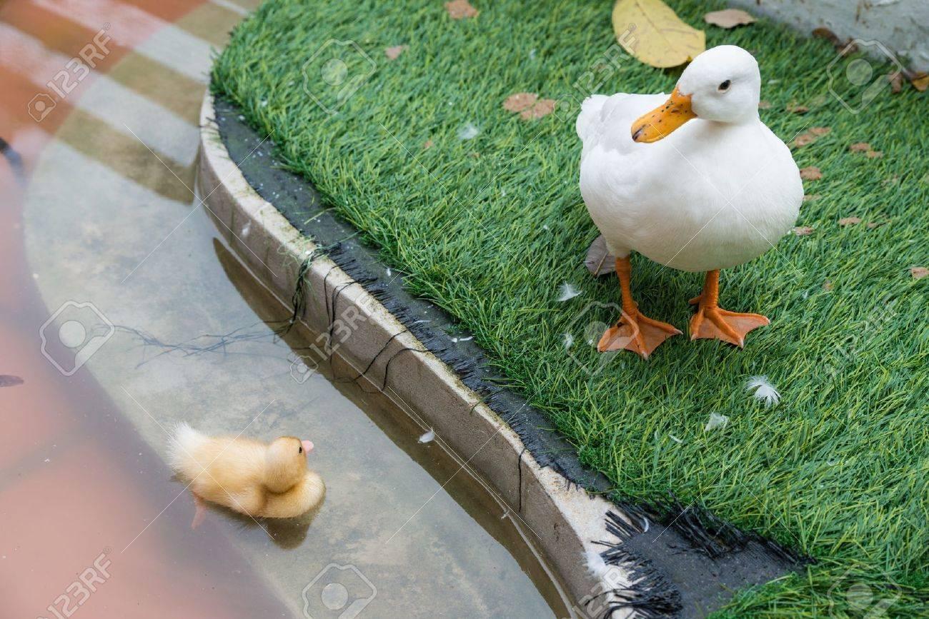 Große Bilder von der Ente