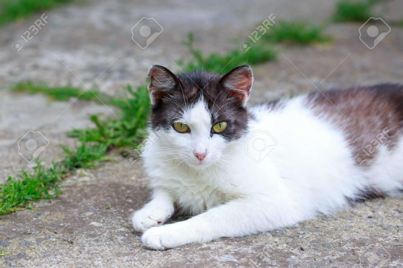 Beautiful cat resting outdoors in the open air - 156313728