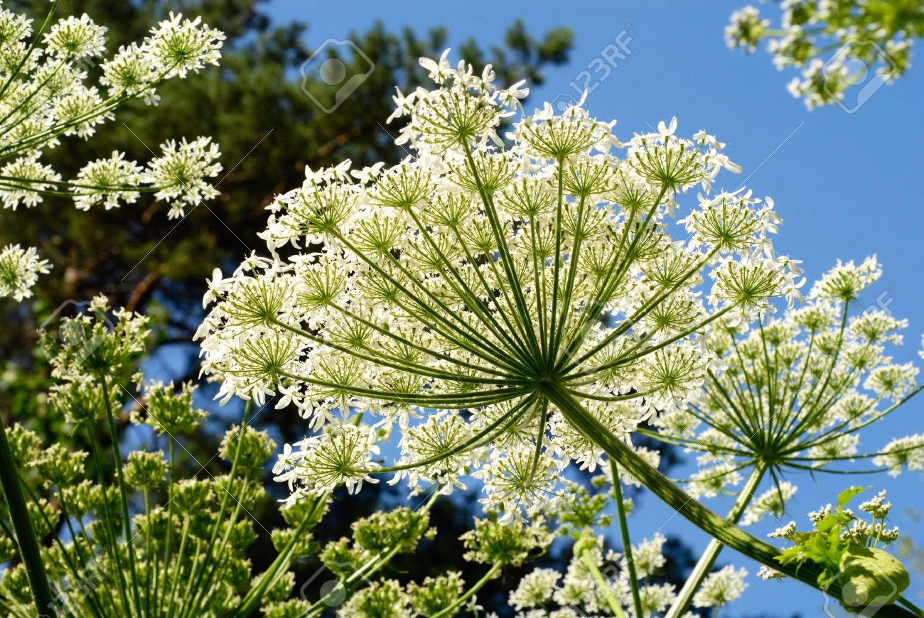 Forest Plants With White Flowers Stock Photo Picture And Royalty