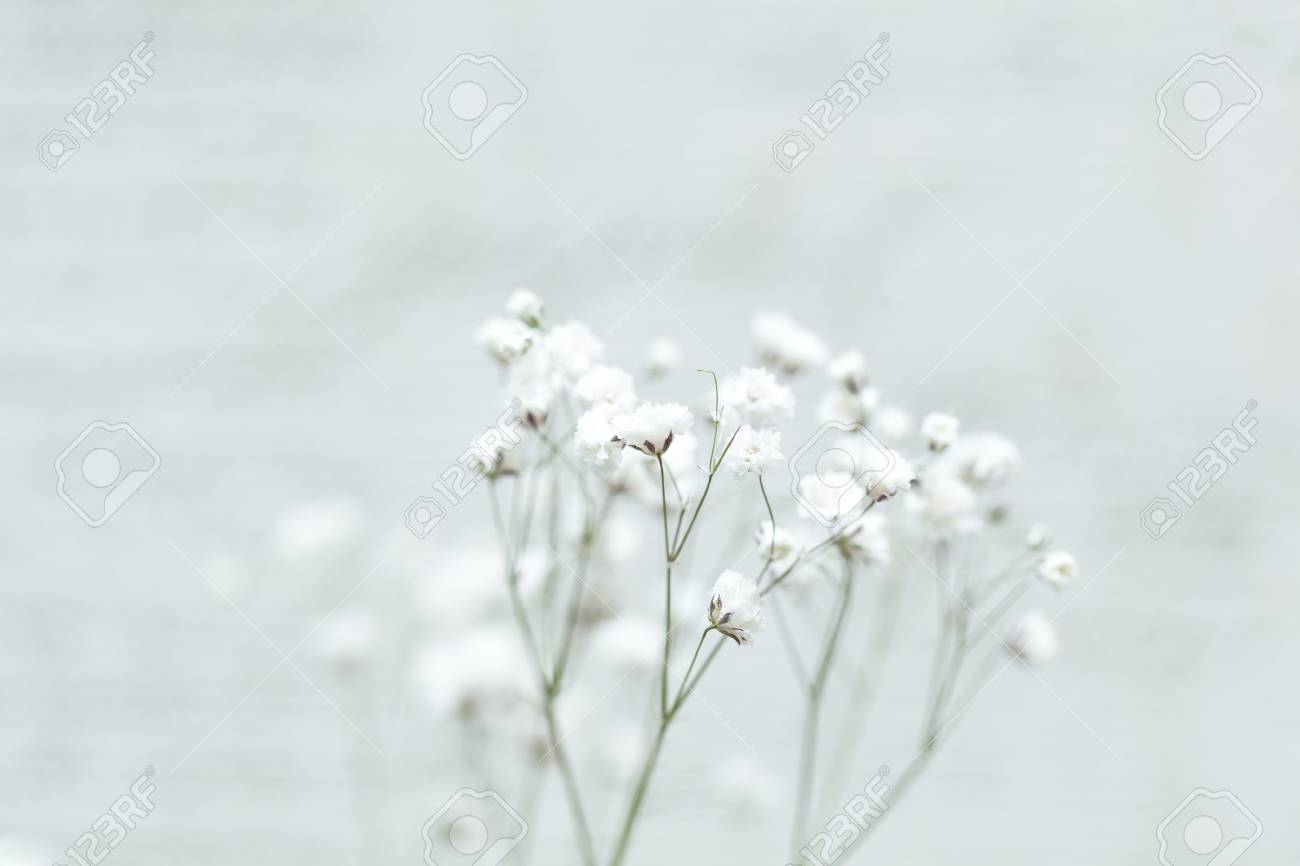 Small White Flowers On An Abstract Background Gypsophila Flower Stock Photo Picture And Royalty Free Image Image 94660826