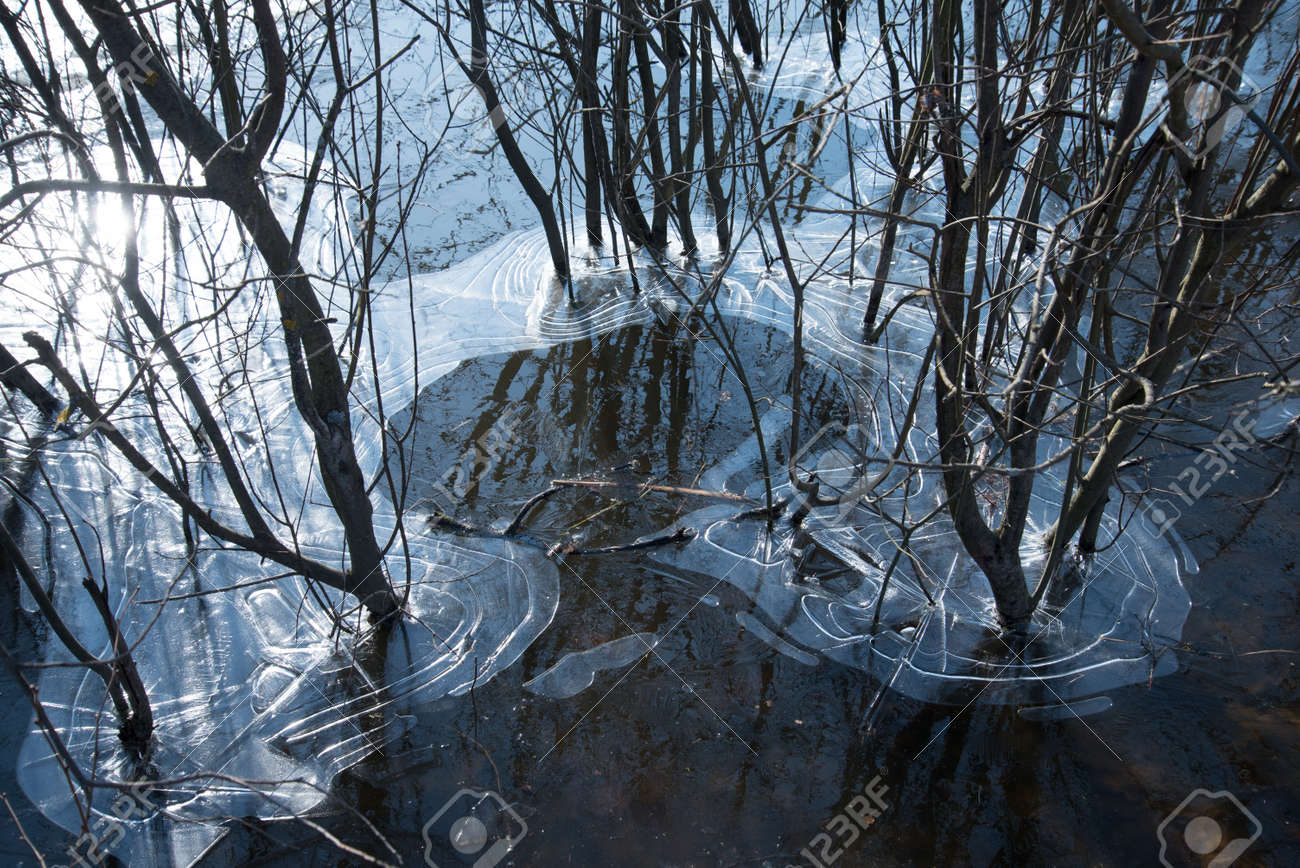 The ice covered the trunks of trees and bushes. Natural natural ice pattern. Frosts - 168593197